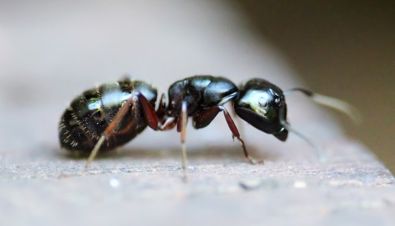 ant removal bellingham