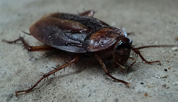 cockroach removal bellingham